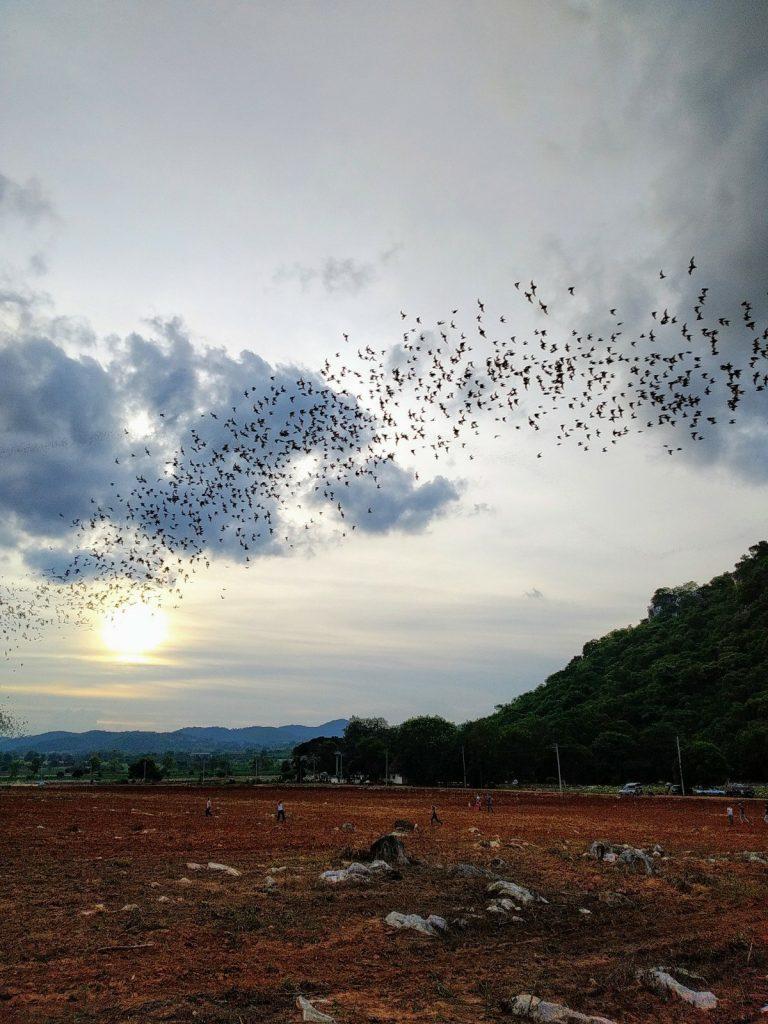 Khao yai bats sunset