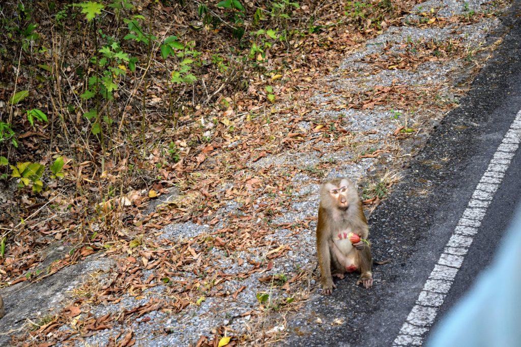 khao yai monkey