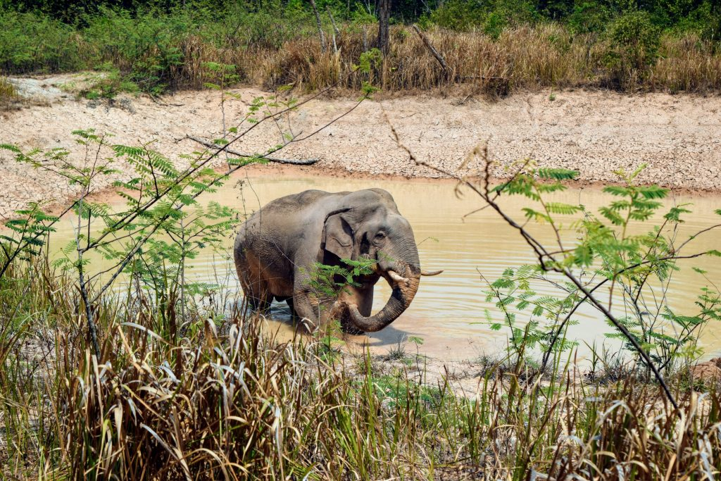 Outside from inside: A dreamy day safari in Khao Yai 4