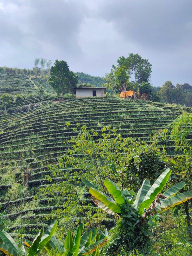 The Mae Salong loop: An easy Northern Thailand road trip 12