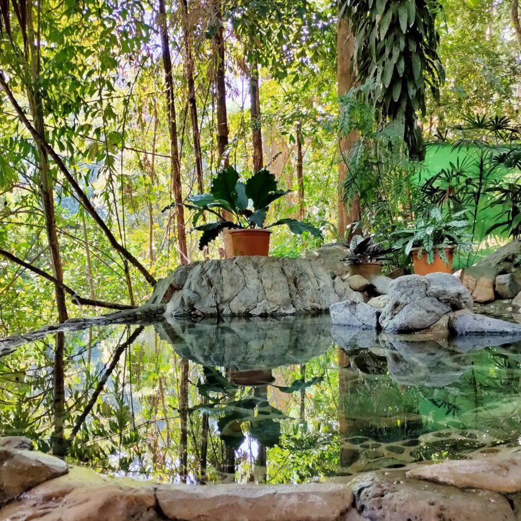 chiang dao hot spring mae salong loop