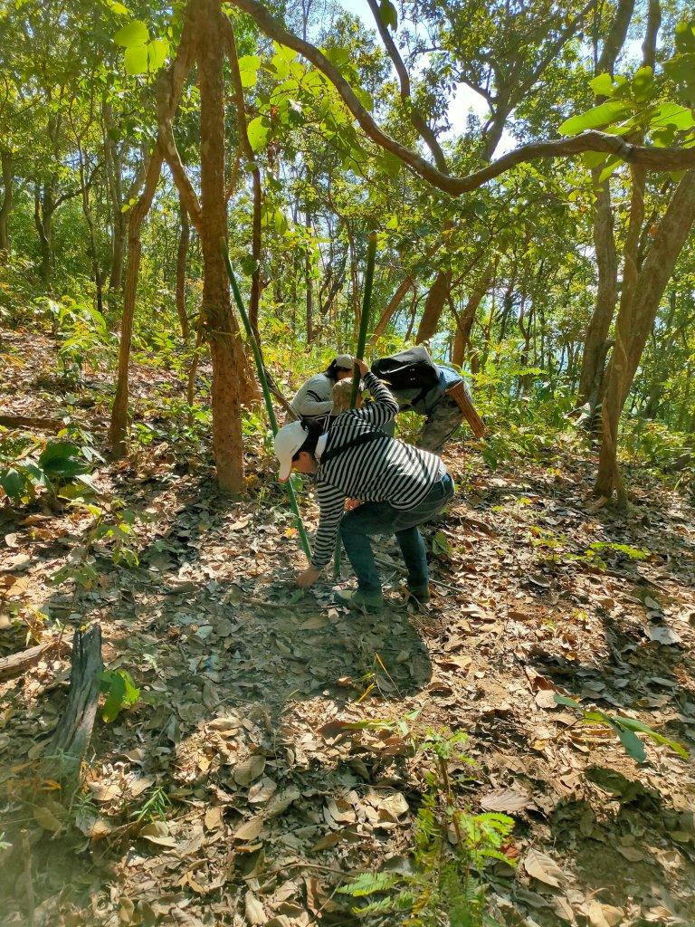 The Mae Salong loop: An easy Northern Thailand road trip 3