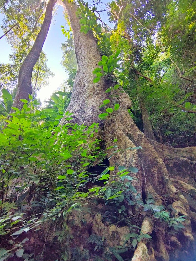 The Mae Salong loop: An easy Northern Thailand road trip 5