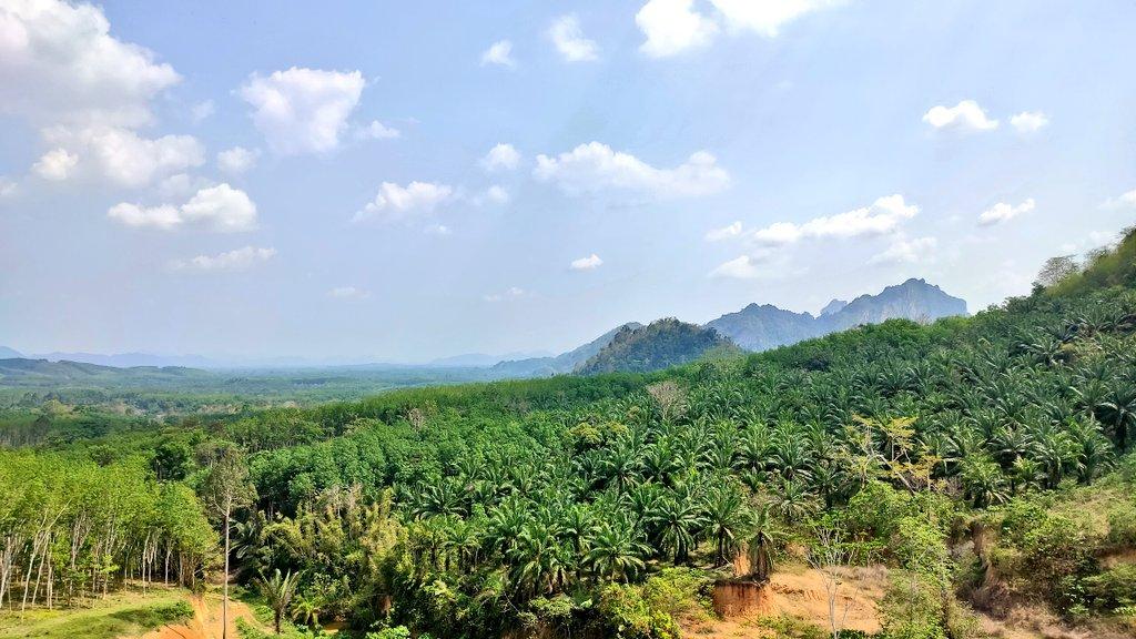 caligo resort khao sok cheow lan lake